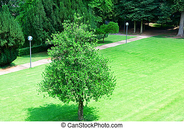 lonely tree on the lawn in the park
