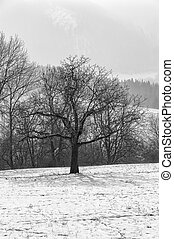 Lonely tree on the lawn in winter