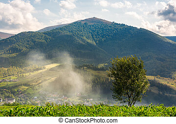 lonely tree on the meadow in smoke. Temnatyk mountain in the...