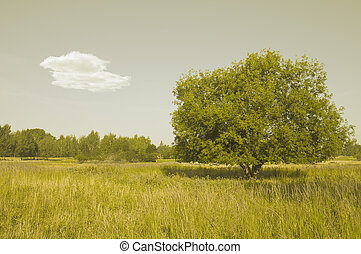 Lonely tree on the meadow.