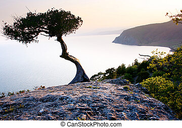 Lonely tree on the mountain. Crimea