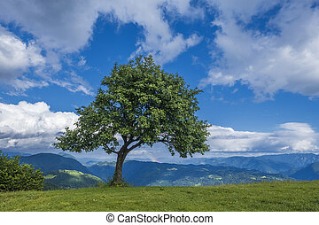 Lonely tree on the mountain top.