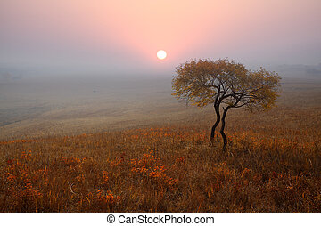 lonely tree on the prairie in autumn