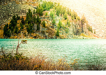 Lonely tree on the shore of a mountain lake. Autumn weather in a mountain valley.