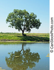 lonely tree on the shore of a pond