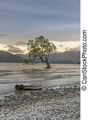 Lonely Tree on Wanaka Lake New Zealand