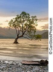 Lonely tree on Wanaka lake sunset tone