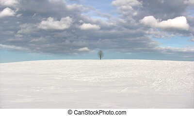 Winter landscape, time lapse of flying clouds above lonely tree