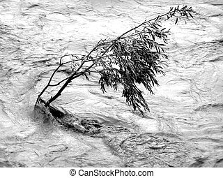 Lonely tree resisting flood
