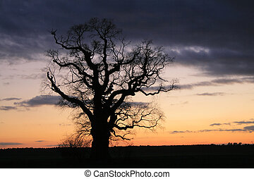 Spooky scene. A lonely tree against the dramatic sky during the evening