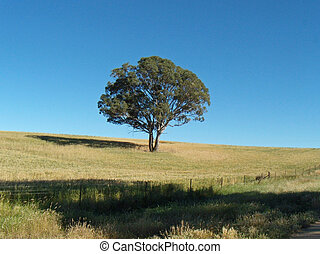 Lonely Tree - Sunny day, lonely tree standing in the middle...