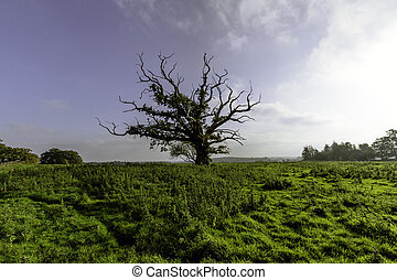 Lonely tree - Surrey, United Kingdom - Lonely tree -...