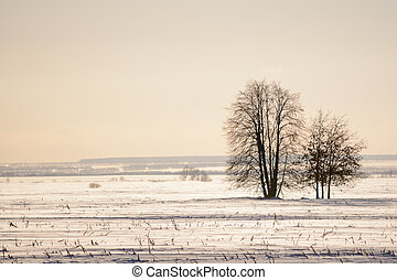 Lonely trees a field in winter