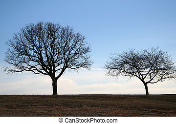 Lonely Trees in the Park without Leaves