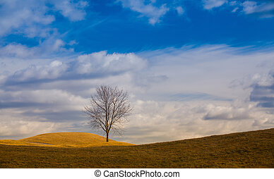 Lonely trees on the hill.