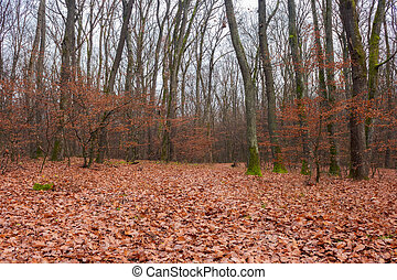 lonely walks in empty naked forest. brown foliage on the...