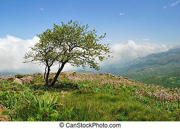 Lonely weathered tree on a hill in the mountains of Crete, Greec