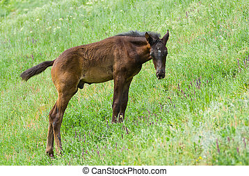 Lonely young foal on a spring pasture