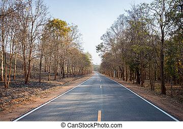 Long asphalt road with dry tree