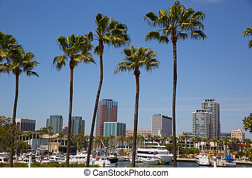 Long Beach California skyline from palm trees of port - Long...