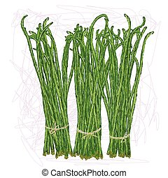 long beans - unique style illustration of bunch of long...
