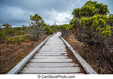 Long Boardwalk Through Marsh - Marsh with Trees and long...