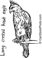Long-crested eagle bird - vector illustration sketch hand drawn with black lines, isolated on white background