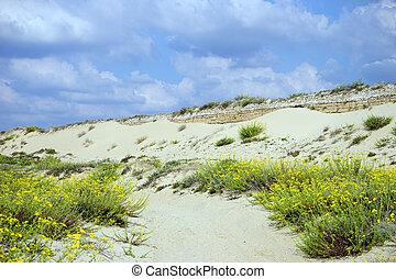 Long dune