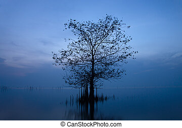 Silhouette tree in the lake