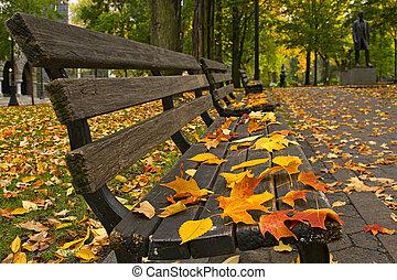 long, feuilles, bancs parc, automne