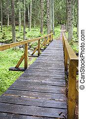 Long forest bridge