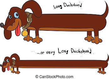 Long fun dachshund - Long cheerful brown dachshund in two...