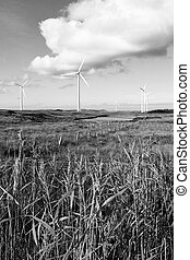 long grass and bogland with wind turbines in black and white