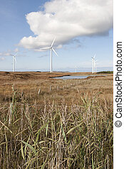 long grass and bogland with wind turbines