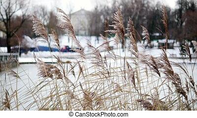 autumn grass in the wind