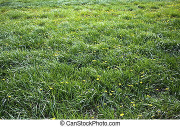 long grass meadow with yellow flowers