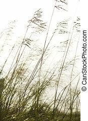 Long grass.