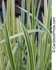 long green grass, reeds