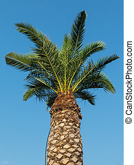Long Green Palm Tree: Ornamental Vegetation