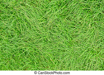 Long green uncut grass close up.