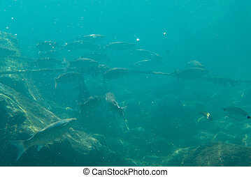 Long group of fish in sea underwater.