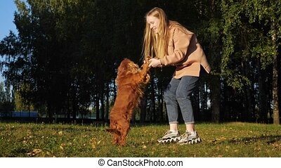 Long haired blonde girl plays with ginger dog holding paws...