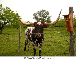 Longhorn cow standing in a meadow