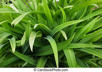 Long leaves of flowers - Green long leaves grass abstract ...