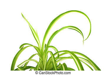 Long leaves of green plants