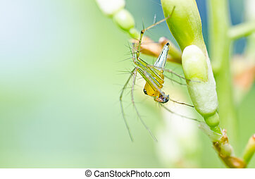 long legs spider in green nature