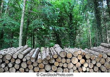 A long pile of timber logs stacked up in a forest