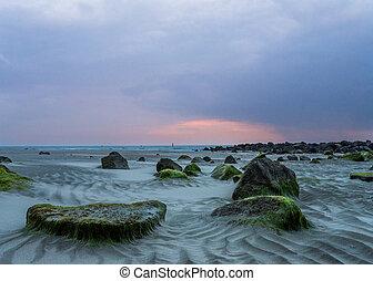 long, mudflat, côte, coucher soleil, hollandais
