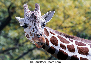 Long Neck - Photo of a giraffe's neck and head