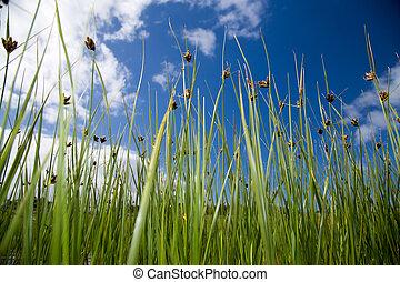 Long peaceful reeds
